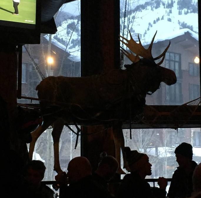 Moose are the Jackson Hole mascot. Just in case you don't to spot on on your trip, there's always the Mangey Moose Saloon in Teton Village.