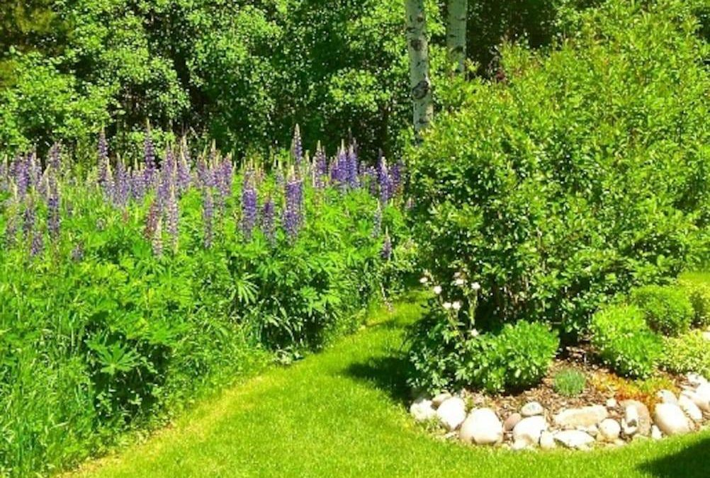 Summer garden view in rear.